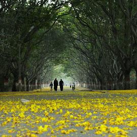 Greenery!!! by Vinod Sekharamahanti - City,  Street & Park  Street Scenes (  )