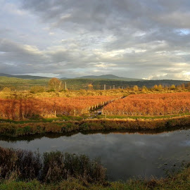 Autumn Berries Sunset by Ian McAdie - Landscapes Prairies, Meadows & Fields ( fruit, mountain, drainage, dyke, travel, landscape, panorama, photography, farm, berry, sky, nature, season, autumn, sunset, fall, slough, cloud, weather, harvest, industry, river )