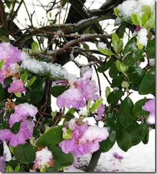Spring Snow 009crop