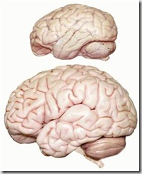 050219_brain_vmed_1p_widec