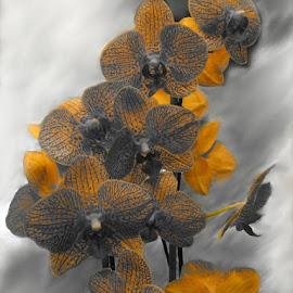 by Alena Hixon - Digital Art Things