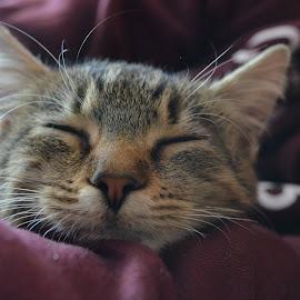 by Mădălina Postolachi - Animals - Cats Kittens