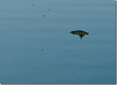 Hojita flotando