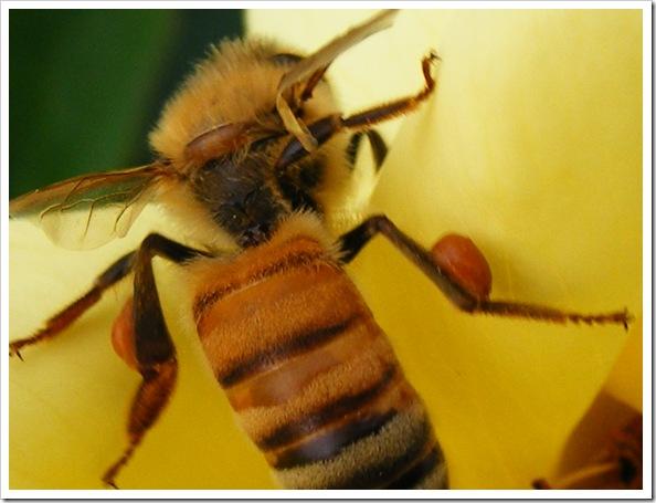 Bee-hind