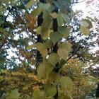 vine wrapping around small tree