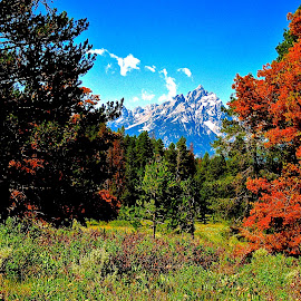 Hiking Signal Mountain in the Grand Tetons by Tyrell Heaton - Landscapes Forests ( mountains, yellowstone, fall colors, trees, signal mountain, hiking )