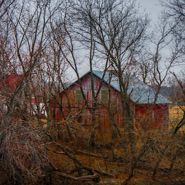 barn by the river by Michelle Danker - Landscapes Forests ( winter, nature, barn, treees, river )