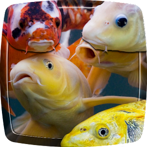 App koi fish live wallpaper apk for kindle fire download for Fish live game