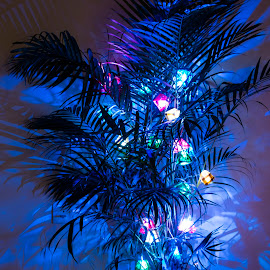 Tree of Lights by Sohil Laad - Buildings & Architecture Homes