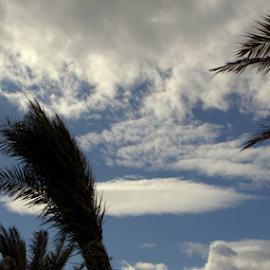 Clouds on the Palms by John Meadows - Landscapes Cloud Formations ( holiday, clouds, sky, palm trees, landscape )