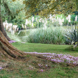 Wakehurst by Mark Thompson - Nature Up Close Trees & Bushes ( water, trunk, pampas grass, grass, trees, leaves, flowers, garden, reeds )