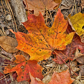 The Change of Seasons by Luanne Bullard Everden - Nature Up Close Leaves & Grasses ( grasses, twigs, nature, colorful, autumn, seasons, leaves )