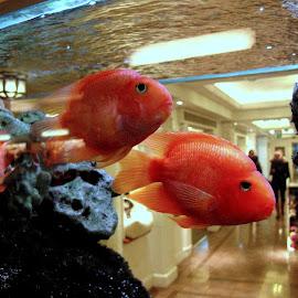 by Nicoletta Guyot Bourg - Animals Fish (  )