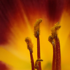 Flower on Fire by Alan Cline - Abstract Macro ( orange, macro, red, bright, fire, flower )