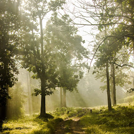 Pathway to Heaven by Senthil Kumar - Landscapes Forests ( senthil, wayanad, kerala, sunrise, landscape, sun rays, path, nature )