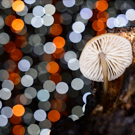 by Alah Ja Ja Bin - Nature Up Close Mushrooms & Fungi ( colour, colorful, fungus, forest, forest mushrooms, close up, bokeh, photography, colours )