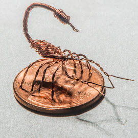 The Stinger by Shaun Peterson - Artistic Objects Other Objects