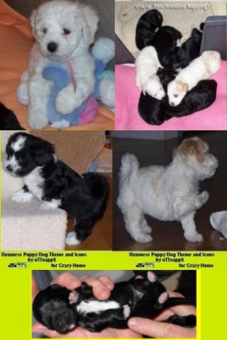 【免費個人化App】Puppy Dog Theme Crazy Home-APP點子