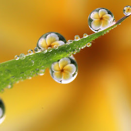 :: All of ONE :: by Dedy Haryanto - Nature Up Close Natural Waterdrops