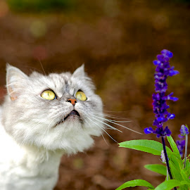 Lulu in the Garden... by Martha Pope - Animals - Cats Portraits ( kitten, cat, shelter, persian, adopt, rescue, flower )