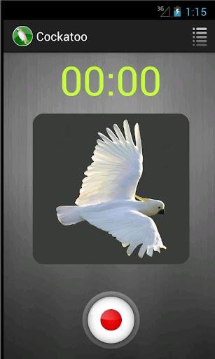 Cockatoo Recorder