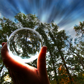 by Dipali S - Artistic Objects Other Objects ( reflection, ball, sky, nature, artitsic, oak, trees, transparent )