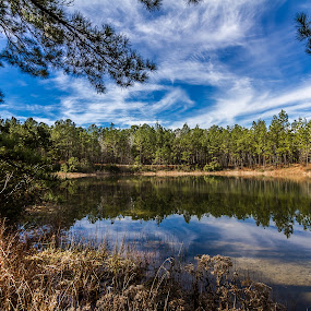 Morning at the Lake by Ken  Frischkorn - Landscapes Waterscapes ( water, clouds, trees, lake, pond )