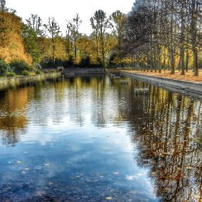 City Lake in Park in Autumn by Nat Bolfan-Stosic - City,  Street & Park  City Parks ( reflection, park, autumn, trees, lake )