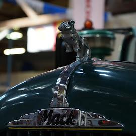 Mack Dog by Jefferson Welsh - Transportation Automobiles