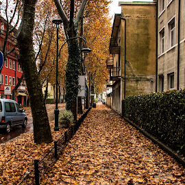 by Filip Kvakic - City,  Street & Park  Street Scenes ( car, mestre, building, autumn, beautiful, trees, leaves, italy )