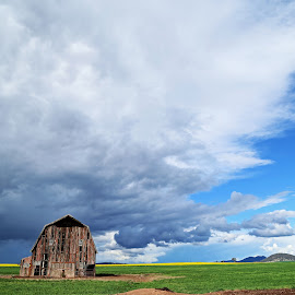 Supermans Barn  by Vanessa Sapsford - Landscapes Prairies, Meadows & Fields ( superman, barn, canola, meadow, storm )