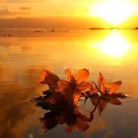 by Linda Ragnarsdottir - Landscapes Sunsets & Sunrises (  )
