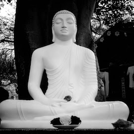 White Buddha by Chopsy DC - Buildings & Architecture Statues & Monuments