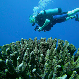 Diver and Coral by David Gilchrist - Landscapes Underwater ( kona, diver, coral, underwater, hawaii )