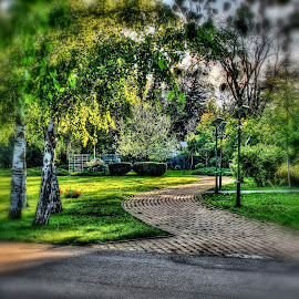 Follow the yellow brick road by Alin Militaru - City,  Street & Park  City Parks ( park, nature, trees, road, walk, city,  )