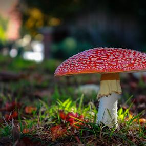 by Bevlea Ross - Nature Up Close Mushrooms & Fungi ( mushroom, fungi, fairies )