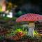 Mitcham Mushroom2.jpg