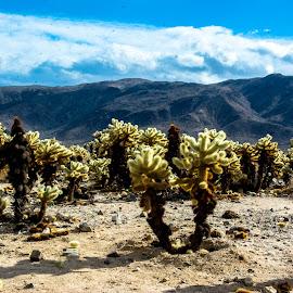 by Randy Sampson - Landscapes Deserts