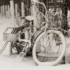 Left Behind by Karen Davis-Matthews - Transportation Bicycles ( cold, vintage, snow, chained up, bicycle,  )