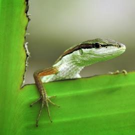 Look Around by Anggi Gunawan - Animals Reptiles
