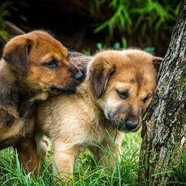 One with nature by Shivaang Sharma - Animals - Dogs Puppies ( love, puppies, dogs, tree, nature, puppy, india, animal )