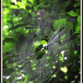 No Way by Kwong Chung-man - Nature Up Close Webs