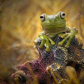 HI by Hendrik Susanto - Animals Amphibians