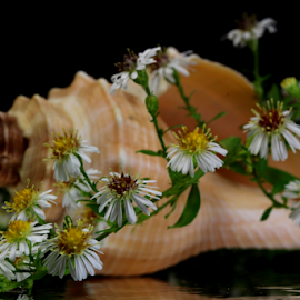 by Dipali S - Artistic Objects Other Objects ( wild, shell, nature, still life, white, flowers )