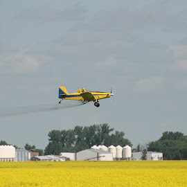 Sprayer Plane Over Canola by Robert Hamm - Transportation Airplanes ( canada, canola, airplane, agriculture, farmland, sprayer plane, crop duster, rural, crop, manitoba, field, altona, nature, chemical, outdoor, sprayer )