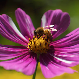 beehave by Charles Saunders - Novices Only Macro ( purple, bee, colorado, best, flower )