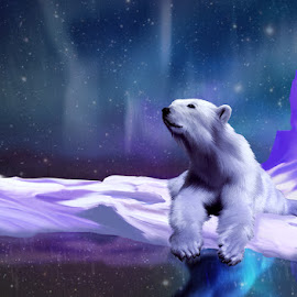 Contemplative Polar Bear by Charlie Alolkoy - Illustration Animals ( bear, snow, northern lights, night, polar bear )