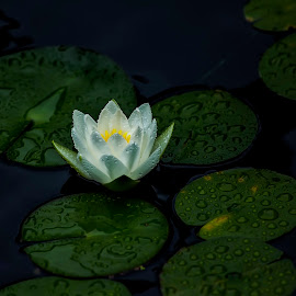 by Michael Provenzano - Nature Up Close Other plants (  )