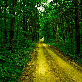 by Joel Eade - Transportation Roads ( awesome, gorgeous, secluded, green, beautiful, trees, forest, road, perfect, dirt, pretty, country )