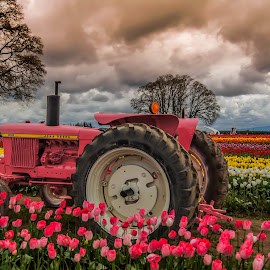 I think her tractors sexy by James Case - Transportation Other ( farm, nature, pink, tulips, landscapes, tractor, photography, flower,  )